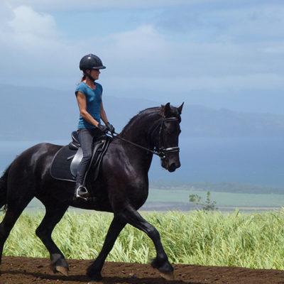 horse_5